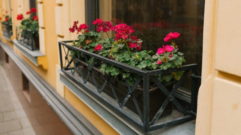 ofrenda en los balcones